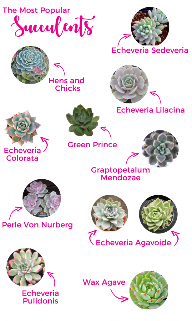 Flower Glossary | As seen on TodaysBride.com