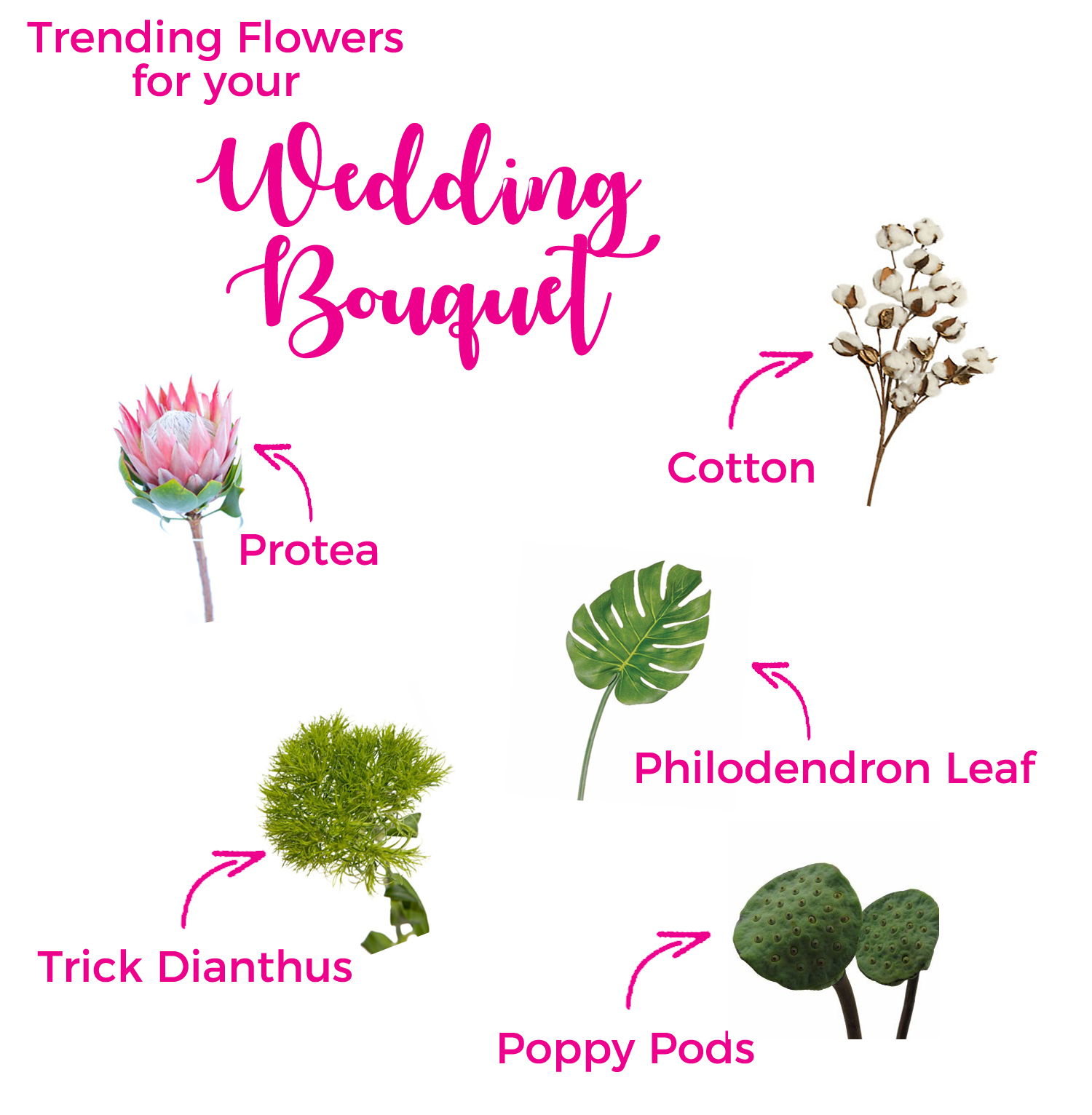 Flower Glossary | As seen on TodaysBride.com